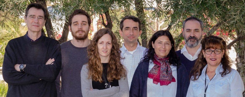 descubren la conexión que permite la coordinación bilateral de la visión en mamíferos