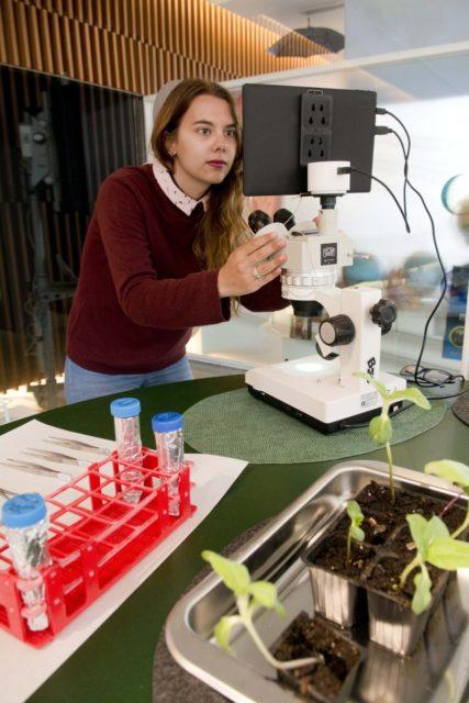 la uja muestra qué estresa a las plantas