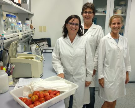 aroma del tomate para proteger cultivos