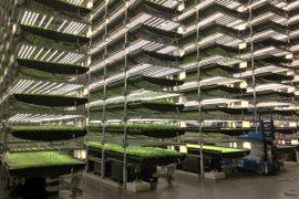 ¿es posible la agricultura vertical?