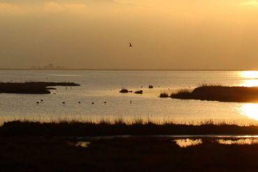el tratamiento de las aguas urbanas provoca cambios en la flora y fauna de los ríos