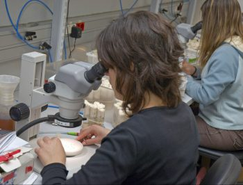 Identifican genes relacionados con el diferente grado de agresividad del cáncer según el sexo