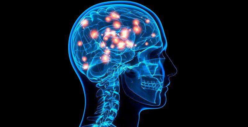 El-cerebro-tiene-celulas-madre