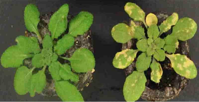 Mecanismo plantas