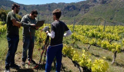 ULPGC ,proyecto para mejorar la capacidad vitícola de la Macaronesia