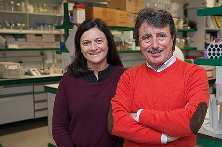 el csic centra su investigación sobre el párkinson en desentrañar sus causas