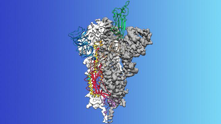 NIH, No más BULOS sobre el origen del COVID-19