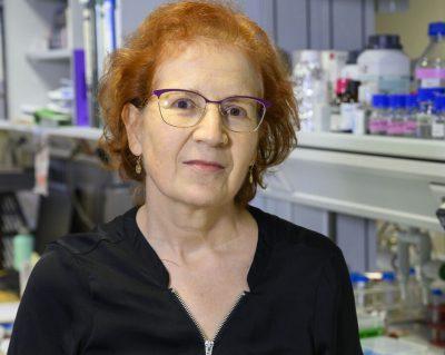 csic lanza 12 proyectos científicos para abordar la pandemia