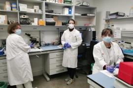 las defensas a examen prever la evolución del coronavirus
