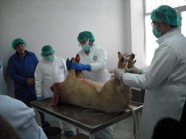 laboratorios alto secreto prueban vacunas contra covid