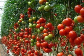 el modelo agrícola almeriense