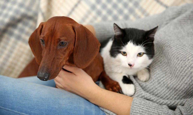 verano de covid-19 para sus perros y gatos