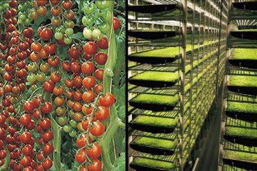 mejores universidades latinoamericanas en agricultura