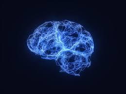 cartografía de circuitos neuronales