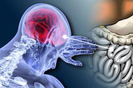 la microbiota intestinal influye en el cerebro y el ánimo