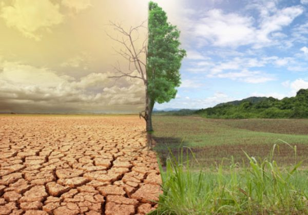 Diez buenas noticias sobre desertizacion5