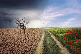 Diez buenas noticias sobre desertizacion7