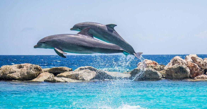 Los delfines adaptaron su esperma para reproducirse en agua1