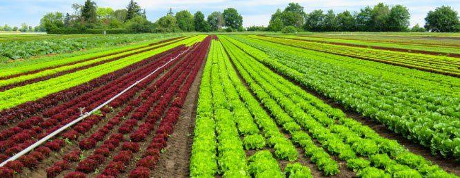 Los desafios invisibles de una agricultura verde en Europa5
