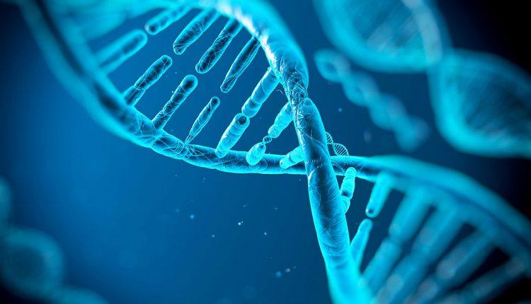Proteina ayuda a reparar el ADN y podria potenciar la quimioterapia