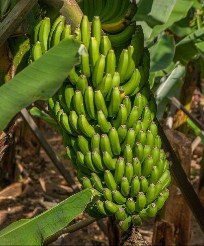 banana 3561020 1280