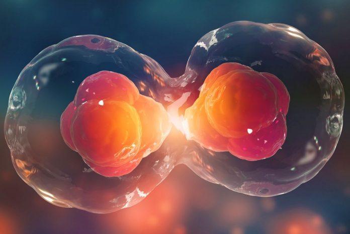 celulas madre mitos realidades 696x465 1