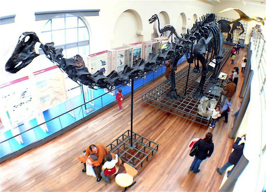 El CSIC digitaliza los archivo Museo de Ciencias Naturales4