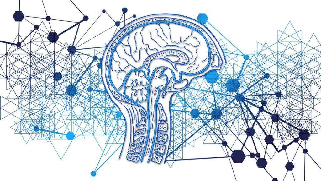 arquitectura informatica cerebro