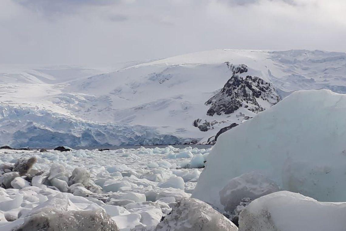 Espécies invasoras ameaçam Península Antártica, alerta pesquisa - Planeta