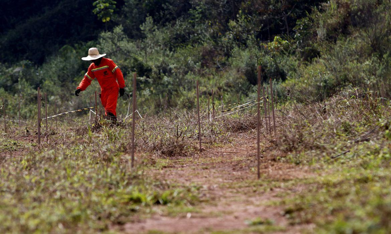 Mariana: estudos mostram sucesso na recuperação de solo com rejeitos - Planeta