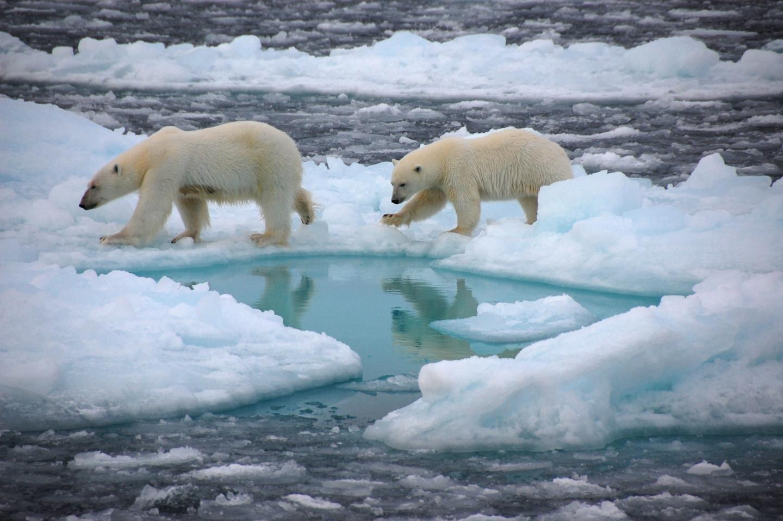 Polo Norte estará livre de gelo no verão em breve - Planeta