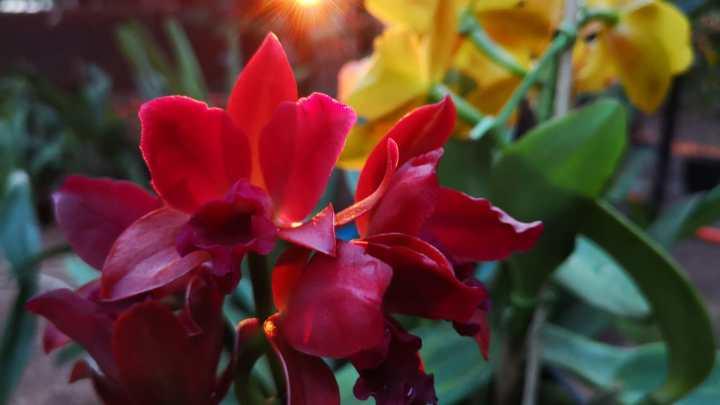 Expo Feria Orquídeas en Cambyretá