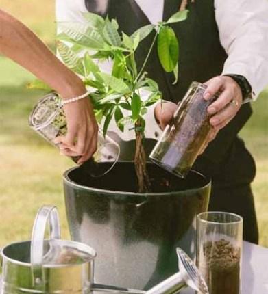 Plantar árbol en bodas