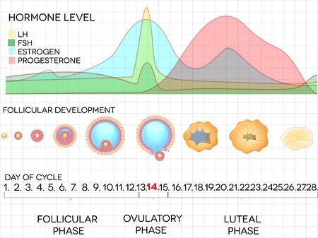 Calculadora de fertilidad o calculadora de ovulación