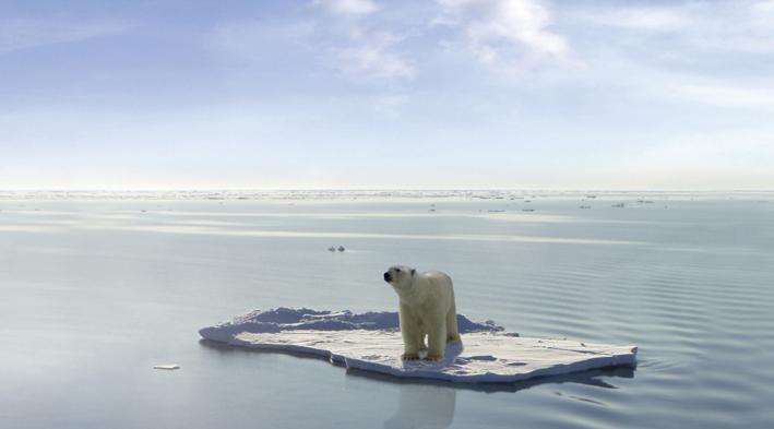 La crise touche tous les secteurs de l'économique, au social, jusqu'à l'écologique qui touche la flore, la faune et la planète