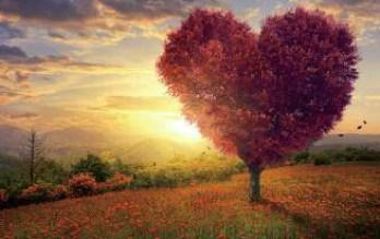 L'œil utilitariste rend la nature utile, la vision poétique la rend belle et lumineuse.