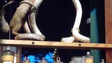 Entre références mythologiques et historiques, entre serpents et autres natures venimeuses, lz monde des poisons est fascinant.
