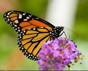 Le battement d'ailes d'un papillon au Brésil peut-il déclencher une tornade au Texas ?