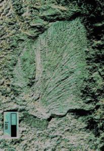 Les chercheurs ont découvert les fragments fossiles de 13 arbres.