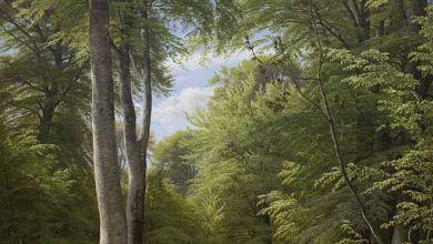 Le hêtre, arbre de climat tempéré ne devrait plus pousser que dans le nord-est de la France