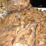 Tamarindo seeds
