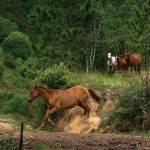 Horseplay (Finca Lagunilla, Jalapa) —Marco Ortiz www.estudioideart.com