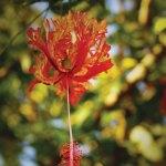 Nature at work —Oscar Andrés Walter Sandoval