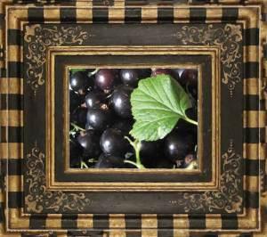 Blackcurrants (zoë @ flickr)