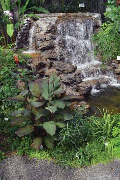 Streams are just part of the beauty of Blue Harbor Tropical Arboretum