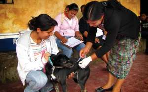 """Vaccinating the dogs and cats campaign (image by <a href=""""http://photos.rudygiron.com"""">photos.rudygiron.com</a>)"""