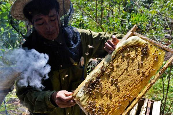 Beekeeper Genaro Cuj inspects the frames