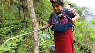 Stronger Guatemala Coffee