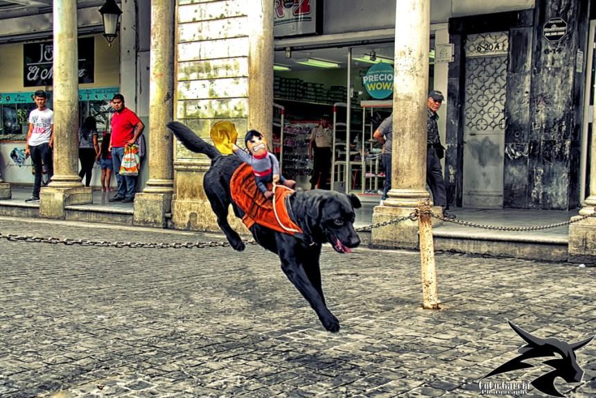 pets of Guatemala
