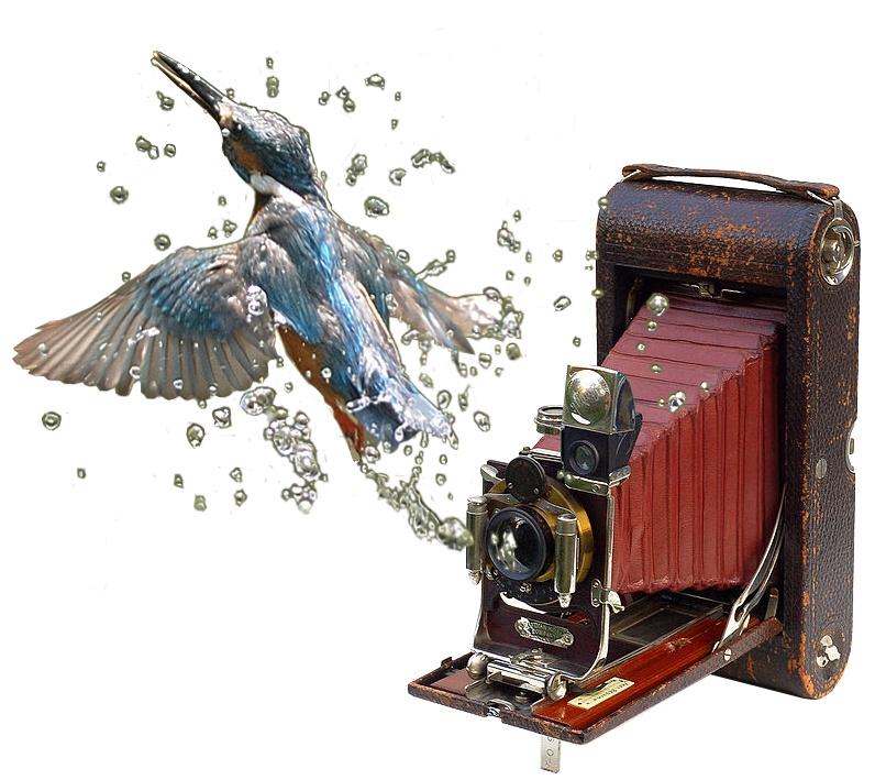 2013-03-le-petit-oiseau-est-sorti-expo